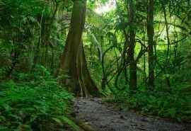 唯美神秘的热带丛