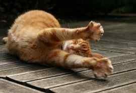 可爱小猫咪图片高