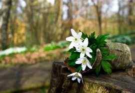 盛开的百合花图片