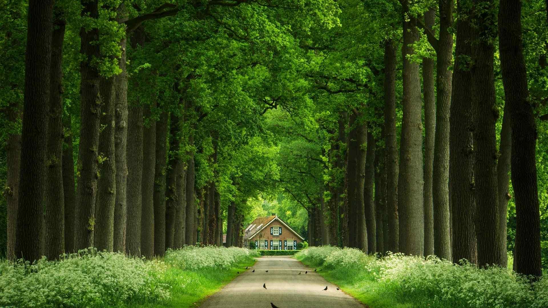 林间小道自然风景桌面壁纸