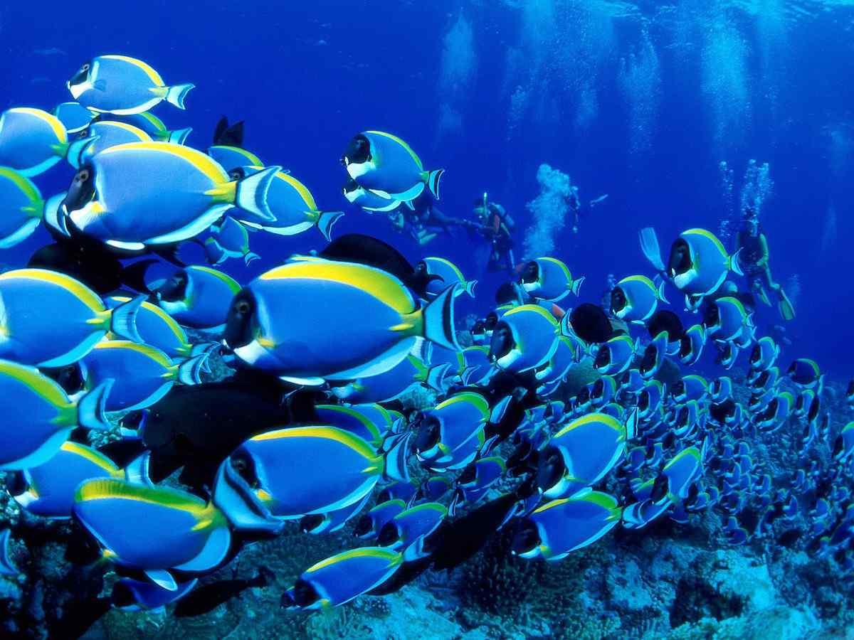 壮观的热带海底世界桌面壁纸