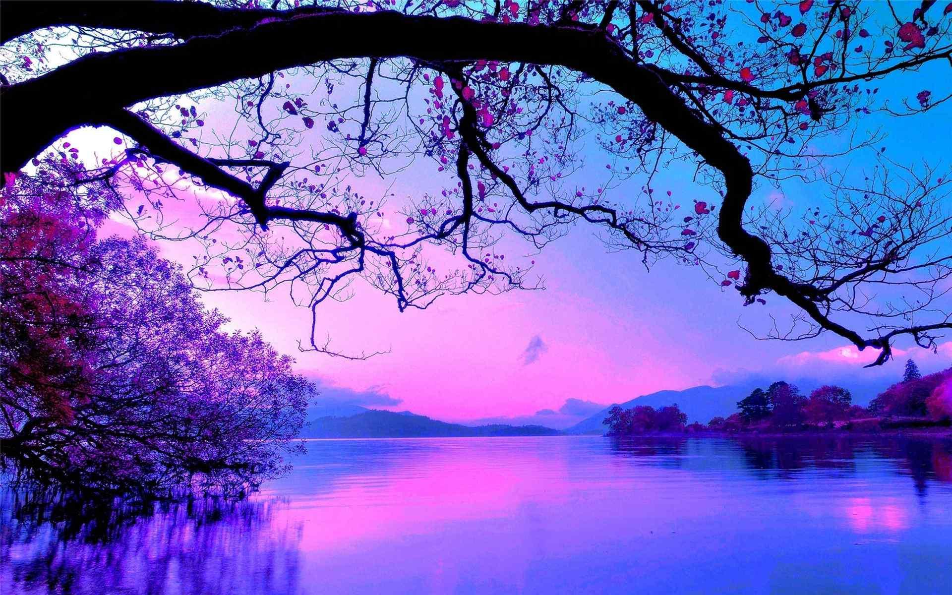 紫色梦幻素材唯美桌面壁纸 -桌面天下(Desktx.com)