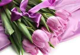 美丽的蝴蝶结与郁金香桌面壁纸