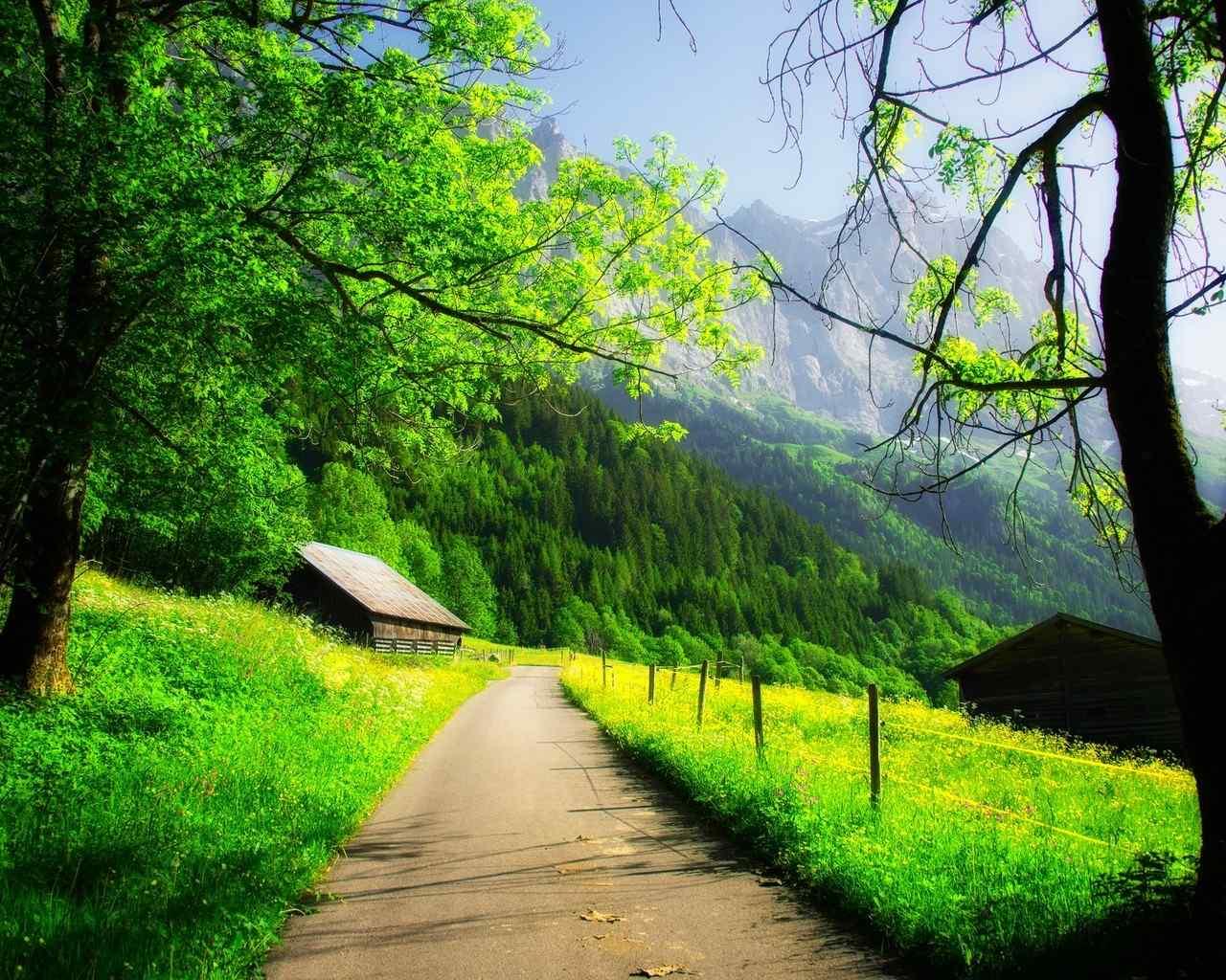 绿色小清新风景护眼桌面壁纸