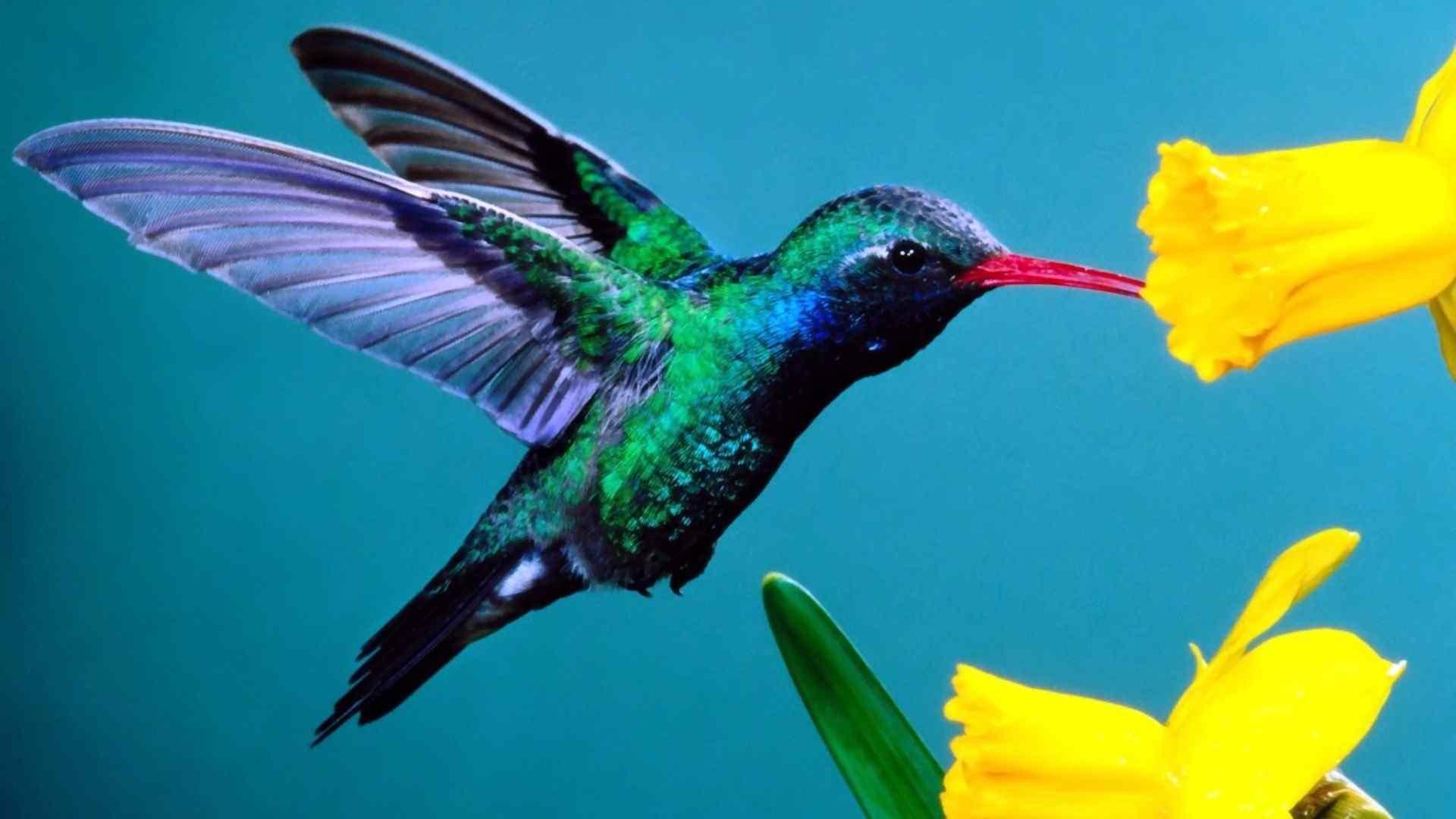 可爱蜂鸟小清新摄影图片高清壁纸。蜂鸟的羽毛一般为蓝色或绿色,下体较淡,有的雄鸟具有羽冠或修长的尾羽。雄鸟中,绝大多数为蓝绿色,也有的为紫色、红色或黄色。雌鸟体羽较为黯淡。分享一组小清新的蜂鸟动物壁纸。桌面天下专注于电脑、手机桌面壁纸,免费提供最好最清晰的壁纸图片下载。网罗最热门的明星、美女、卡通、系统手机壁纸等,桌面天下把热门壁纸推荐给您,让您更快的找到您想要的简约好看个性桌面壁纸。