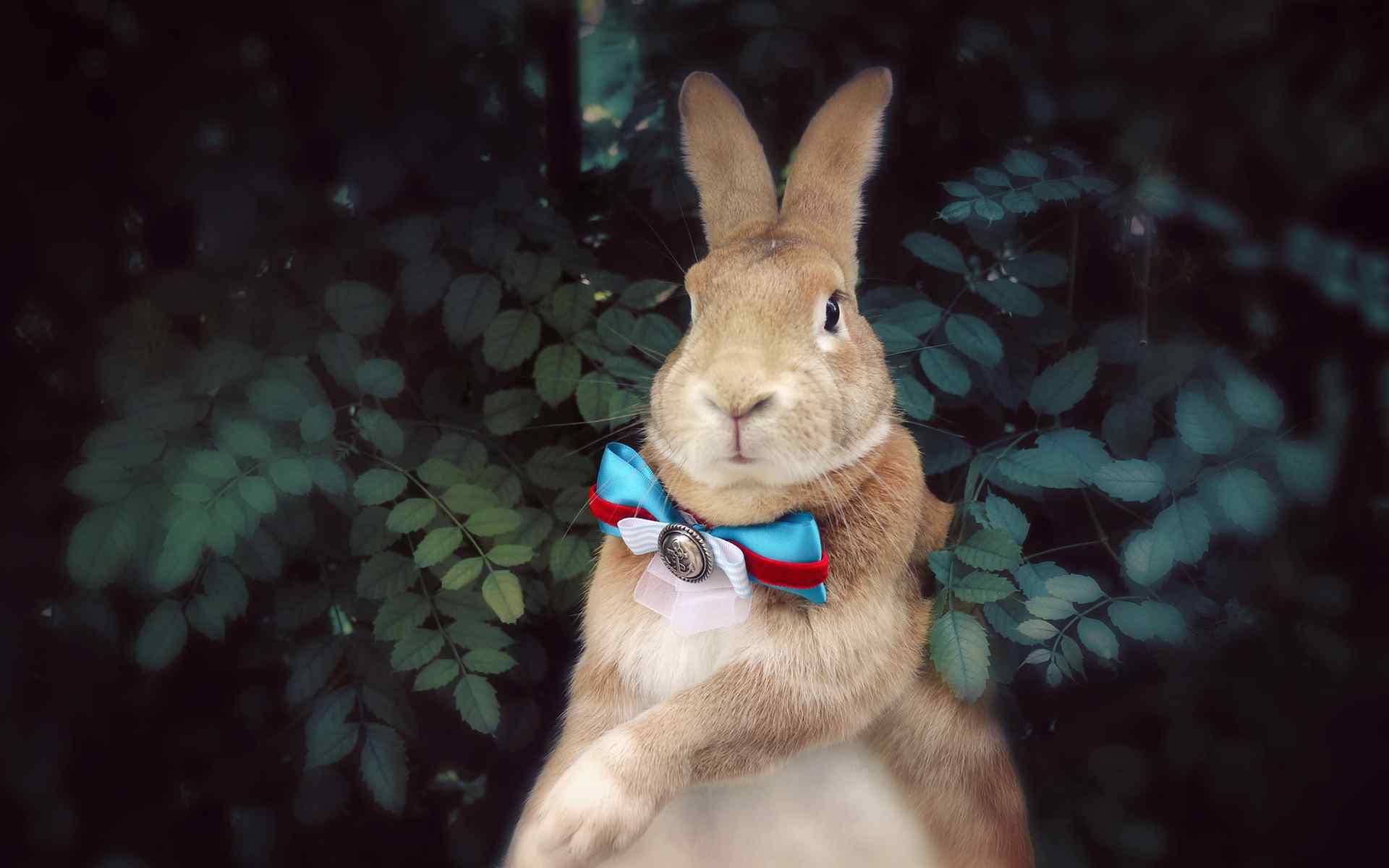 呆萌小兔子唯美写真高清桌面壁纸。兔子的可爱是大家公认的,兔子也是我们最可爱的宠物,各种萌态,就算没有任何动作也是一身的萌气。桌面天下专注于电脑、手机桌面壁纸,免费提供最好最清晰的壁纸图片下载。网罗最热门的明星、美女、卡通、系统手机壁纸等,桌面天下把热门壁纸推荐给您,让您更快的找到您想要的简约好看个性桌面壁纸。