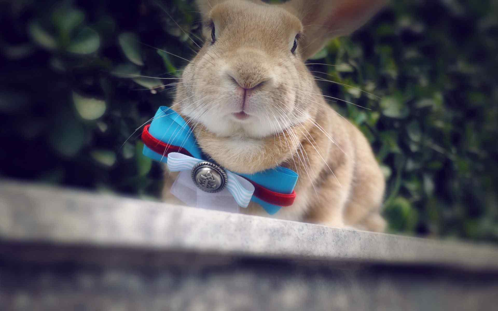 呆萌小兔子唯美写真高清桌面壁纸