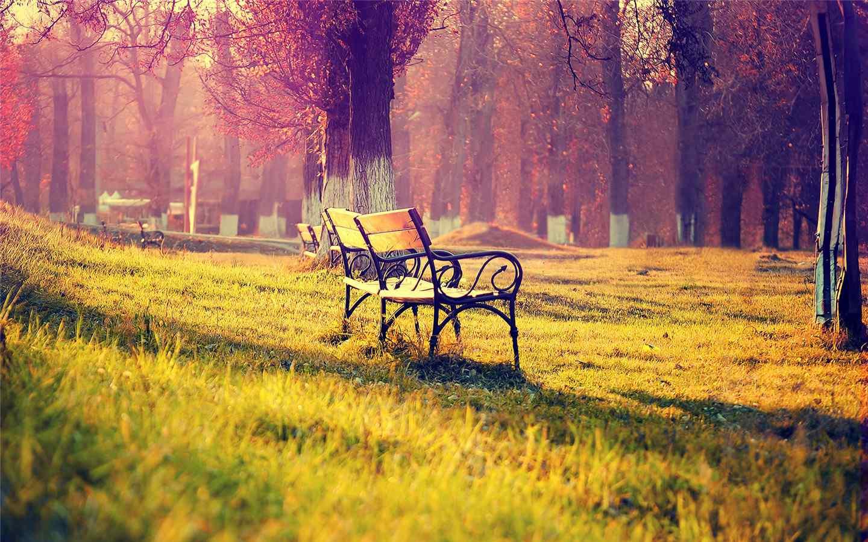 清新护眼公园长椅唯美风景图片