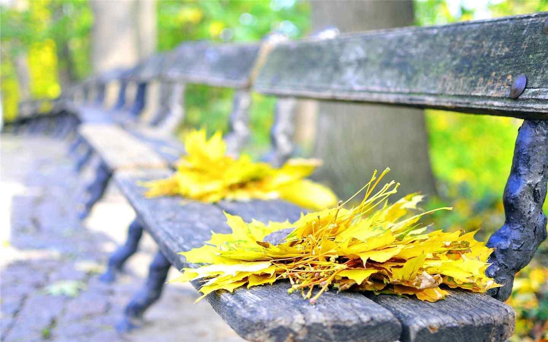 唯美落葉養眼風景圖片高清壁紙,心里有些黯然。這些離開大樹的葉子,也許過多地吸收了太陽的照耀,失去水份的身體干枯輕盈,公園里長條木制連椅上,落滿了各種樹木的葉片,分享一組秋天椅子上的落葉自然風景壁紙圖片。桌面天下專注于電腦、手機桌面壁紙,免費提供最好最清晰的壁紙圖片下載。網羅最熱門的明星、美女、卡通、系統手機壁紙等,桌面天下把熱門壁紙推薦給您,讓您更快的找到您想要的簡約好看個性桌面壁紙。