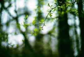 微距绿色叶子植物