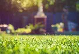 小清新阳光下的绿