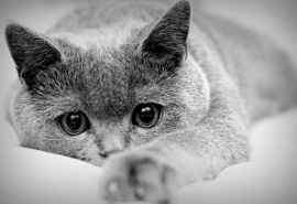 可爱黑白猫咪高清