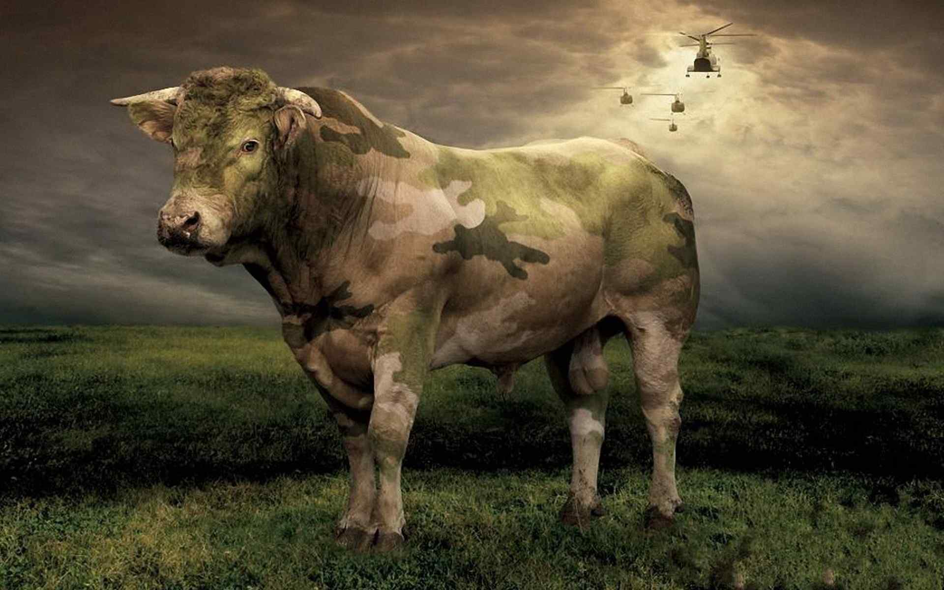 奶牛的图片大全 奶油法牛图片大全 奶牛图片可爱 水牛图片 遇见奶牛菜单图片