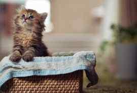 箱子里的猫咪抬头