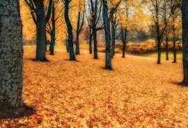 初秋的诗意美景高清桌面壁纸
