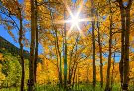 秋天唯美阳光风景
