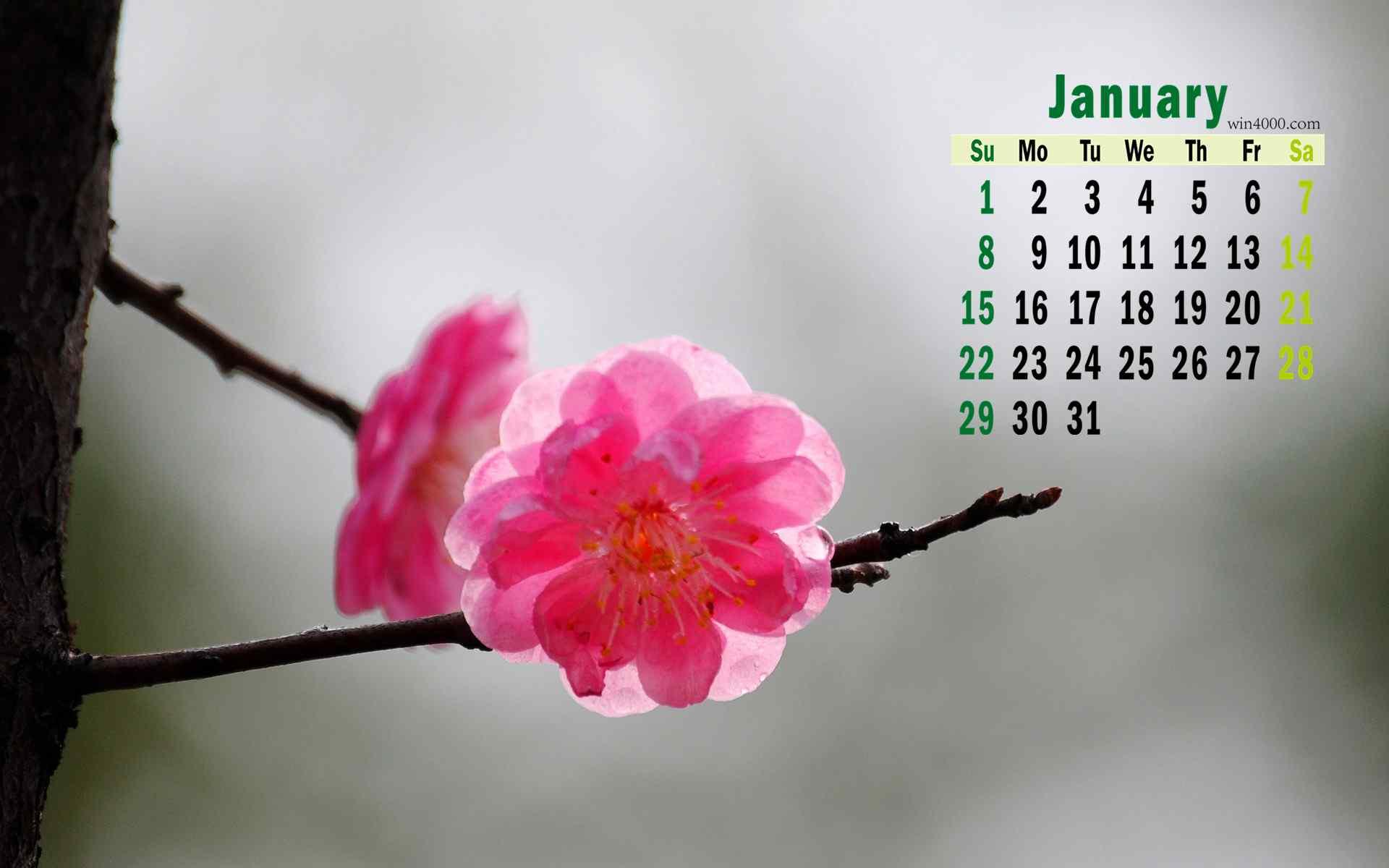 2017年1月日历美丽红梅高清桌面壁纸。并蒂连技朵朵双,偏宜照影傍寒塘。自古以来,梅花都是文人雅士吟咏的对象,梅花是高雅、坚强的象征。分享一组2017年1月傲骨红梅日历桌面壁纸,欢迎继续关注桌面天下,给你带来更多精面壁纸下载资源。