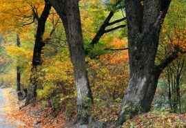秋天枫叶铺地唯美