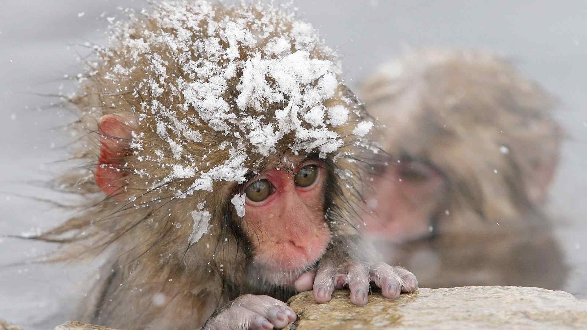 呆萌可爱的小猴子摄影图片高清壁纸