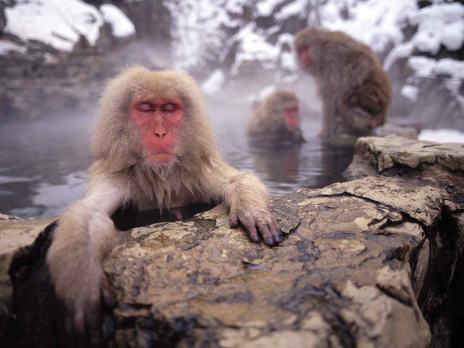 森林里的野生动物猴子高清摄影图片桌面壁纸