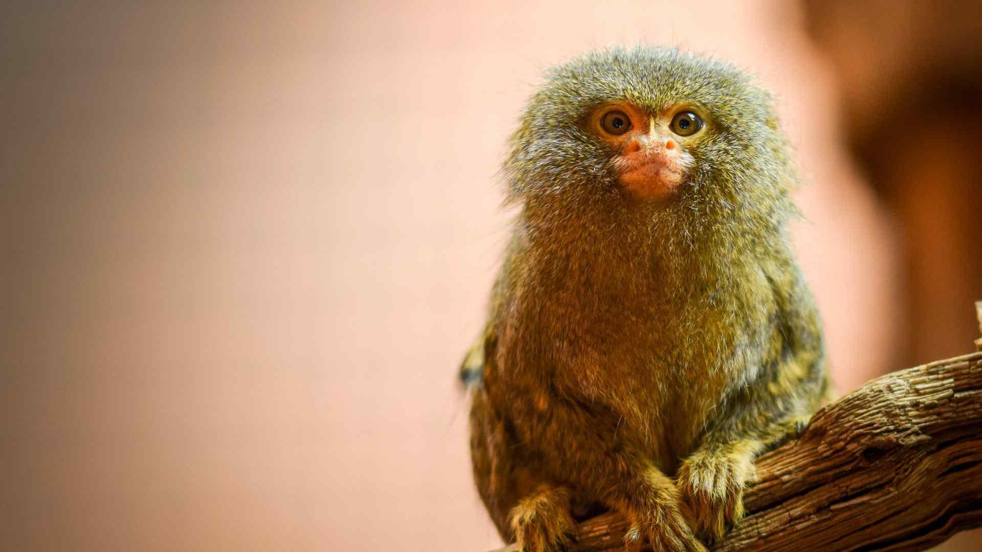 猴子可爱抱抱卖萌摄影图片高清桌面壁纸