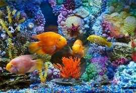超好看的海底世界