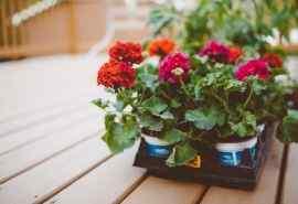 唯美好看的盆栽鲜花高清壁纸