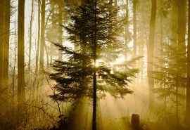 森林光影唯美图片