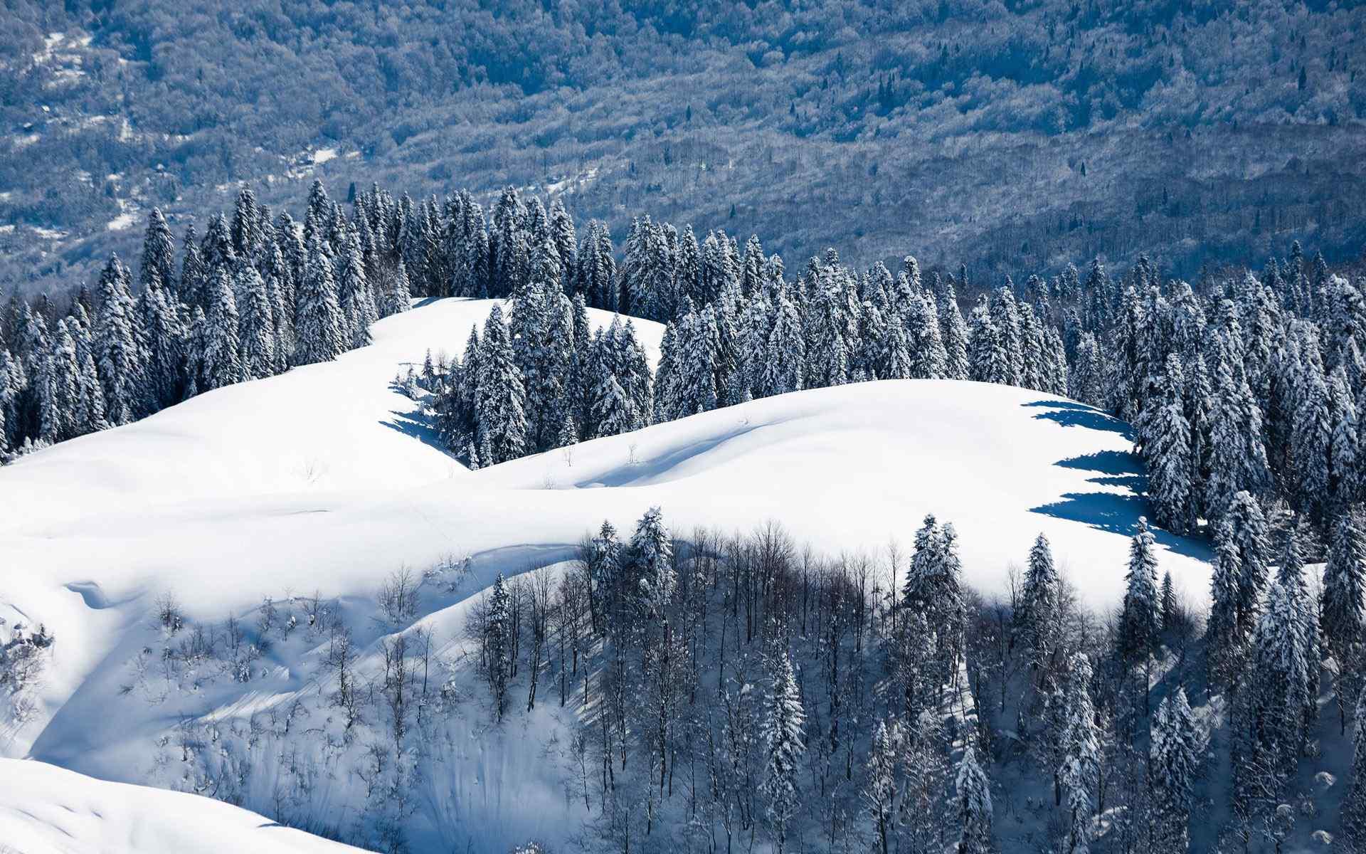 超清壁纸1920x1080雪景动物