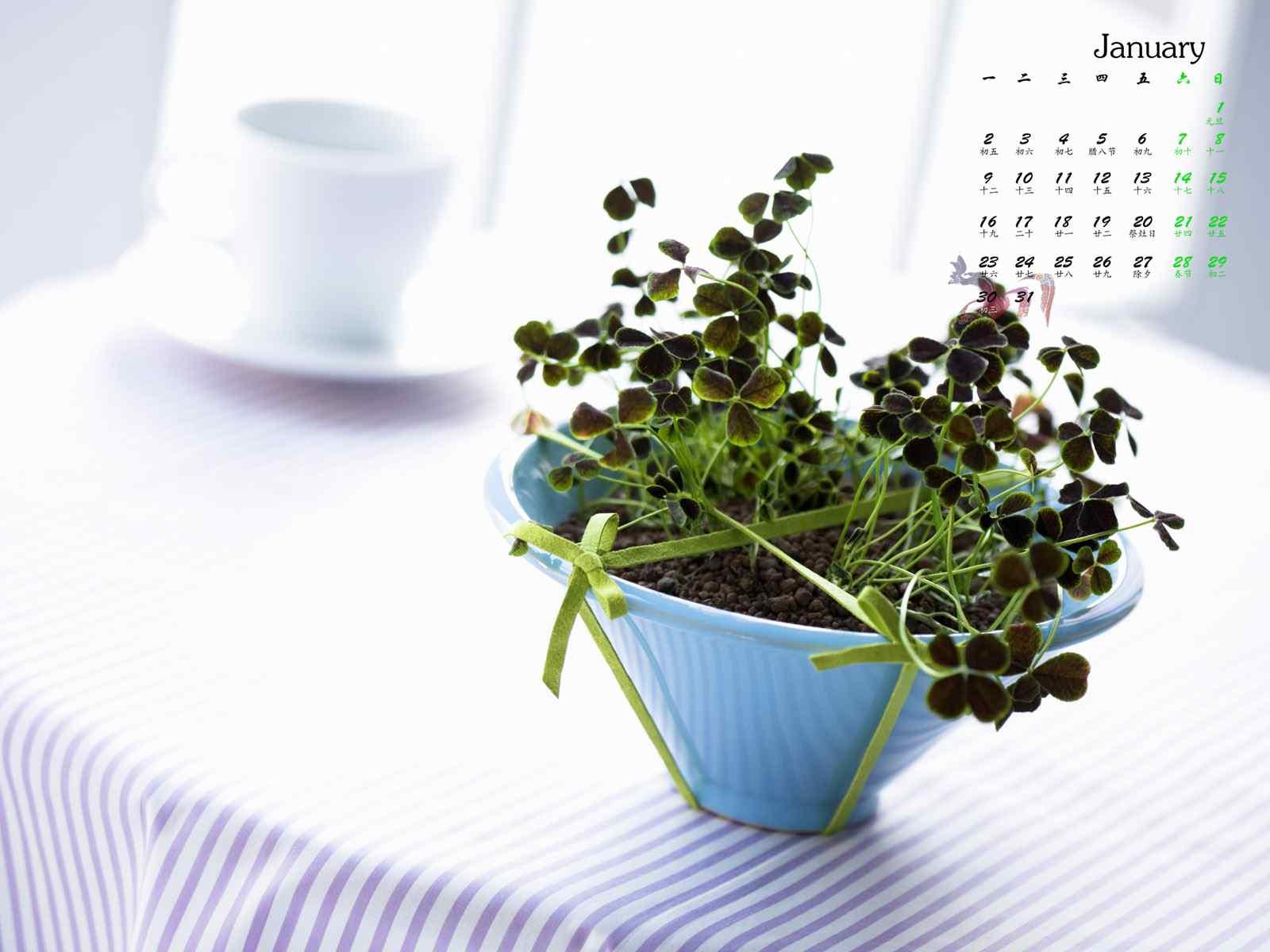 2017年1月日历小清新植物图片壁纸